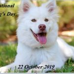 Is it National Make Dog Day Today in the United States of America(USA)