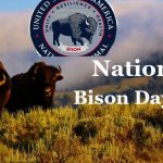 National Bison Day 2019-Happy National Bison Day On 2 November 2019!