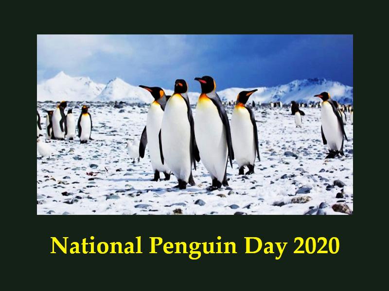 National Penguin Day 2020