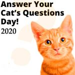 National Answer Your Cat's Questions Day 2020 (22nd January)