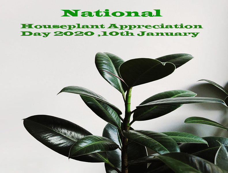 Houseplant Appreciation Day -National Houseplant Appreciation Day 2020 (10th January)
