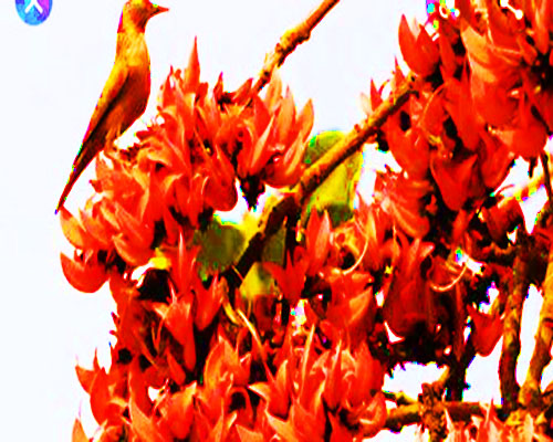 Pohela Falgun 2020: Bangla SMS, Picture, Message, Image, Quotes, status, message, Wallpaper 2020