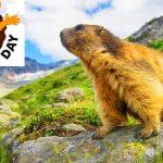 Groundhog Day – 2nd February Happy Groundhog Day 2020