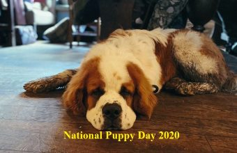 National Puppy Day– 23rd March Happy National Puppy Day 2020