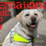 International Guide Dog Day 2020 (29th April)
