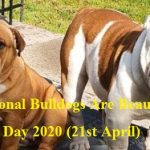National Bulldogs Are Beautiful Day 2021 (21st April)