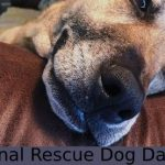 National Rescue Dog Day 2020:Quotes, Wishes, Messages, Greetings, SMS, Sayings, Status