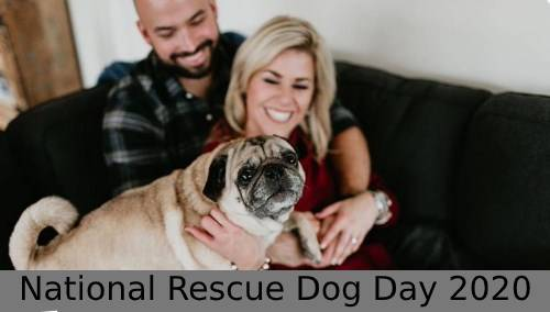 National Rescue Dog Day 2020