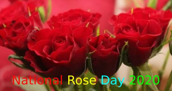 National Rose Day 2020