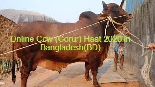 Online Cow (Gorur) Haat 2020 in Bangladesh(BD)