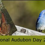 Audubon Day – National Audubon Day 2021 (26th April)