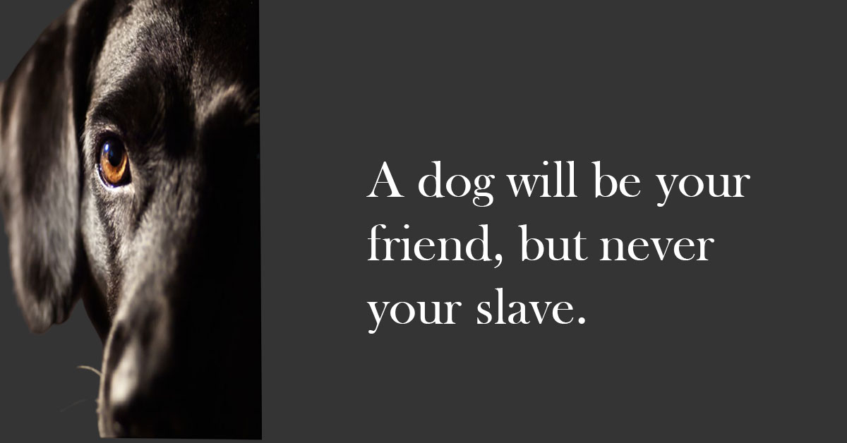 National Black Dog Day 2021 SMS, Message, Quot