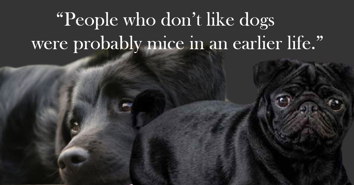 National Black Dog Day  Quotes,