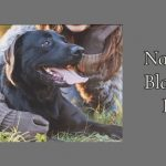 National Black Dog Day 2021 – Black Dog Day 2021:Quotes, Wishes, Greetings, Images Message, Status, & Black Dog Day 2021